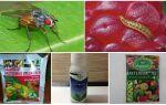 Методи боротьби з малиновою стебловий мухою