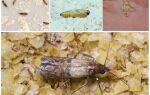 Як виглядають личинки молі на фото