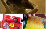 Як боротися з пацюками в приватному будинку