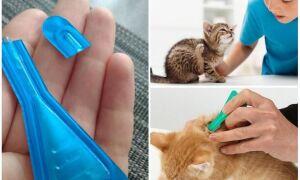 Кот або кішка злизала краплі від бліх – що робити