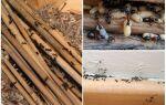 Як позбутися від мурашок в дерев'яному будинку назавжди