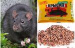 Ефективні засоби від щурів і мишей