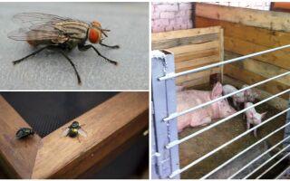 Як позбутися від мух в сараї, свинарнику, курнику, корівнику і козлятника