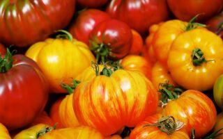 Сприятливі дні для посадки томатів в березні 2019 за місячним календарем: коли садити і доглядати за розсадою помідорів