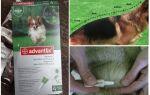 Краплі Адвантікс для собак — інструкція із застосування, відгуки