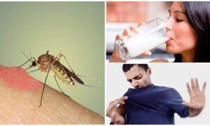 На що летять комарі і як вони знаходять людини