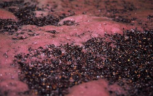 Бродіння домашнього вина