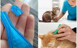 Кот або кішка злизала краплі від бліх — що робити