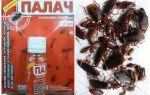 Засіб Кат від тарганів — відгуки та інструкція