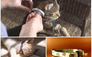 Нашийники від бліх для котів — огляд та відгуки