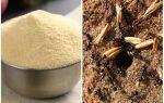 Манка від мурах — відгуки та інструкція