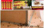 Як позбутися від мурашок в дачному будинку