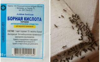 Борна кислота від мурах у квартирі і городі, рецепти приготування
