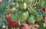 Кращі сорти томатів для Підмосков'я на 2019 рік для теплиць: назва, відгуки, опис, фото