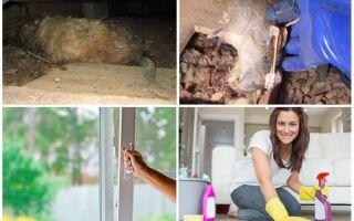 Як позбутися від запаху дохлої пацюки під підлогою