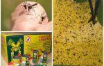 Пастки для комарів своїми руками — як їх зробити