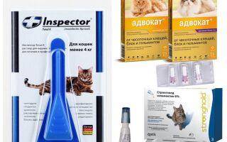 Краплі для кішок від бліх і глистів