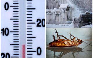 При якій температурі вмирають таргани і їх личинки