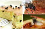 Чим харчуються мухи — читайте!