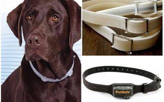 Нашийники для собак від бліх та кліщів