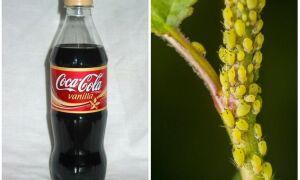 Кока-Кола проти попелиці