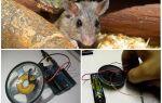 Відлякувач щурів і мишей своїми руками