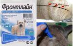 Краплі Фронтлайн для собак — інструкція із застосування, відгуки
