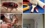 Як знищити тарганів у квартирі назавжди своїми руками